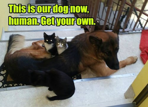 dogs german shepherd minion Cats - 8362051072