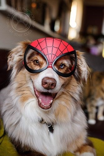 costume dogs halloween Spider-Man - 8362136576