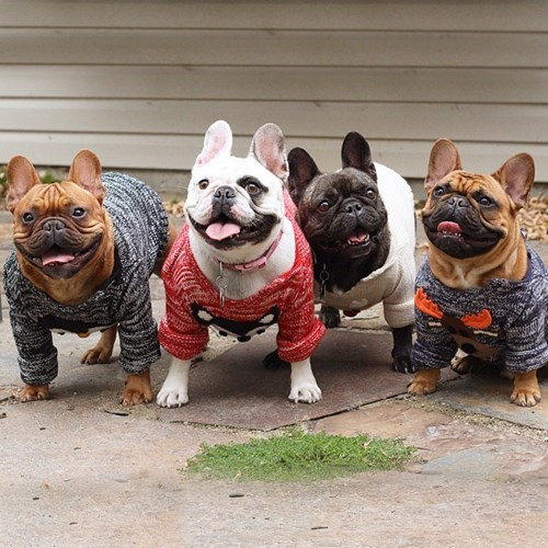 dogs fashion sweaters french bulldogs cute fall - 8362140416