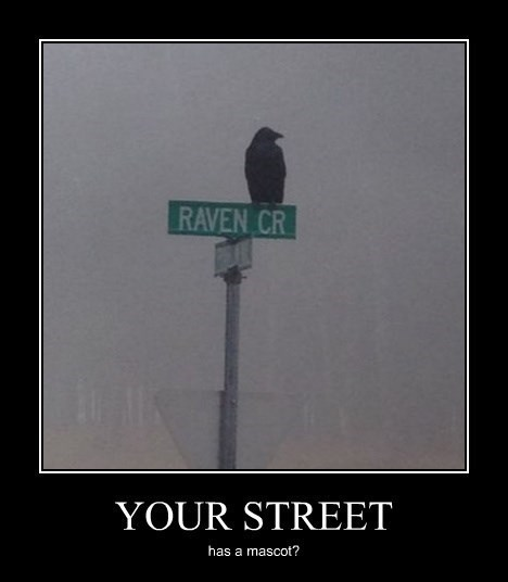 untitled folder/raven.jpeg