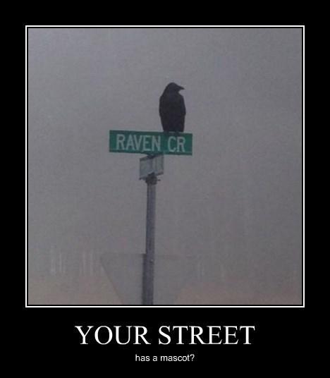 street wtf raven edgar allen poe funny - 8362145024