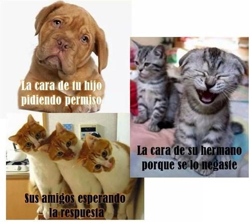 gatos perros Memes animales - 8362153216