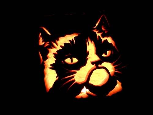Grumpy Cat,pumpkins,halloween