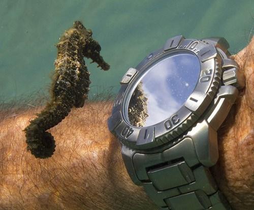 seahorse cute - 8362179584