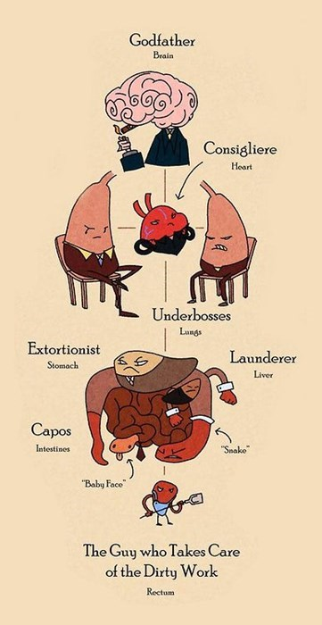 anatomy awesome cute mafia funny - 8362293248