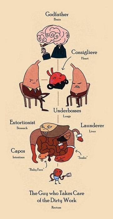 anatomy awesome cute mafia funny - 8362293248