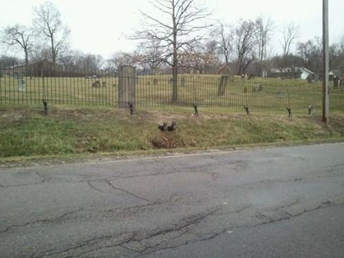 cemetery halloween graveyard prank - 8362376960
