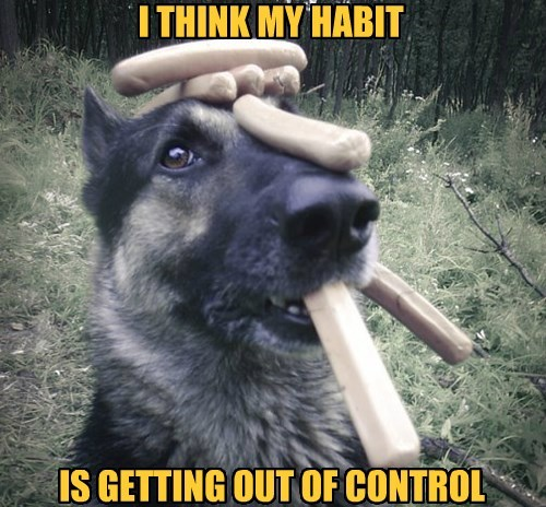 hot dogs,tricks,habit,german shepherd