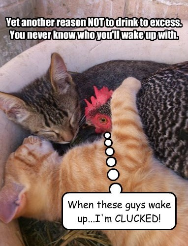 chicken rooster puns Cats - 8362784512