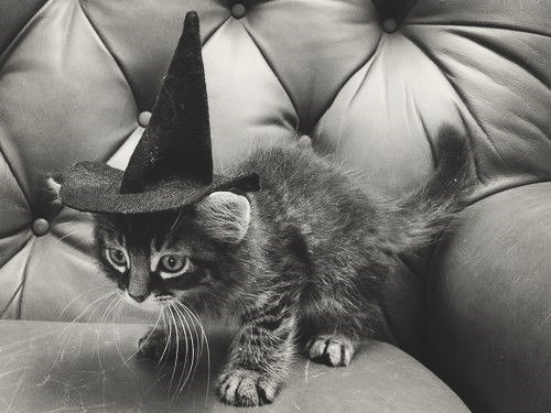 costume,halloween,kitten,cute,Cats