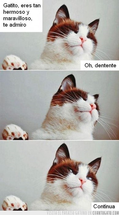 gatos Memes animales medios - 8362953984