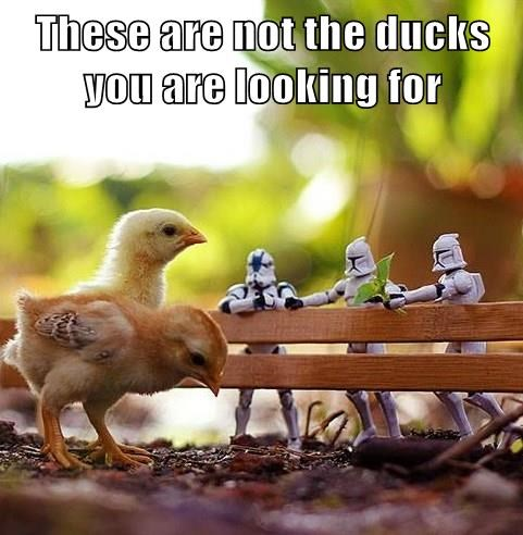 duck,star wars,stormtrooper