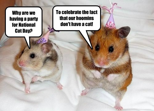 Why are we having a party for National Cat Day? To celebrate the fact that our hoomins don't have a cat!