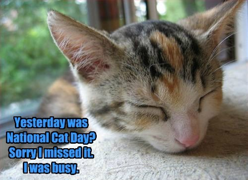whoops nap priorities national cat day Cats