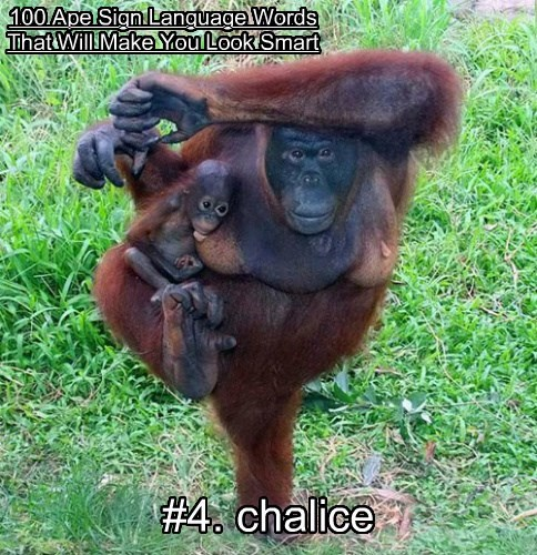 100 Ape Sign Language Words That Will Make You Look Smart #4. chalice