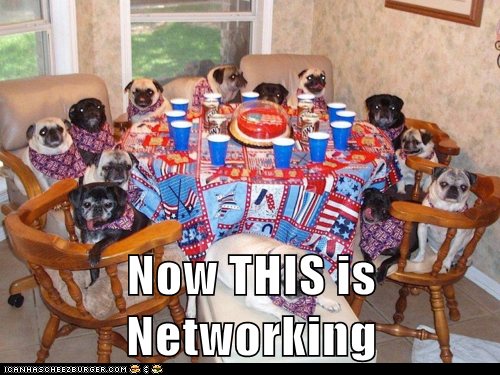 networking,dogs,pug,Party