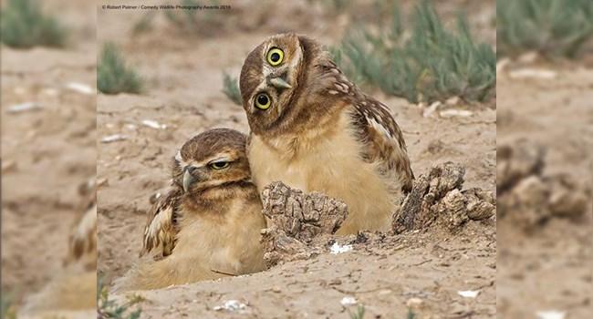 Awards photography stunning comedy wildlife funny funny animals animals - 8364037