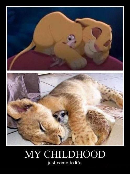 lions Meerkats lion king funny - 8364126720