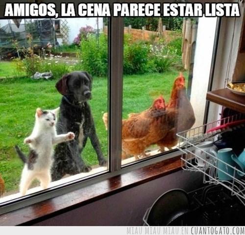 gatos bromas perros Memes animales - 8364133632