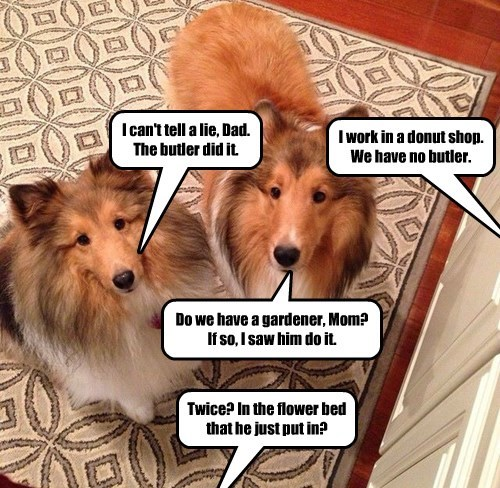 dogs captions funny - 8364384768