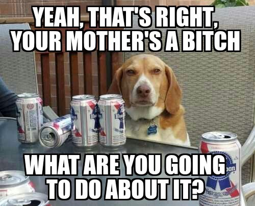 dogs drunk honesty funny - 8364560640