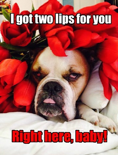 dogs tulips caption funny - 8364565248