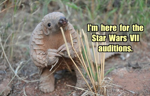 star wars,cute,squee,audition