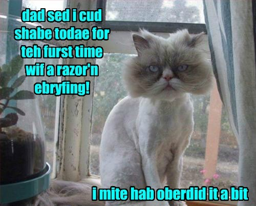 overkill shaving Cats - 8365136896