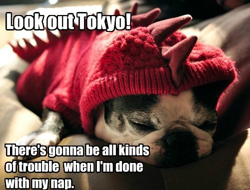 Look out Tokyo! There's gonna be all kinds of trouble when I'm done with my nap.