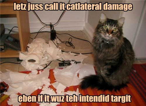 whoops Cats paper towel - 8365277696