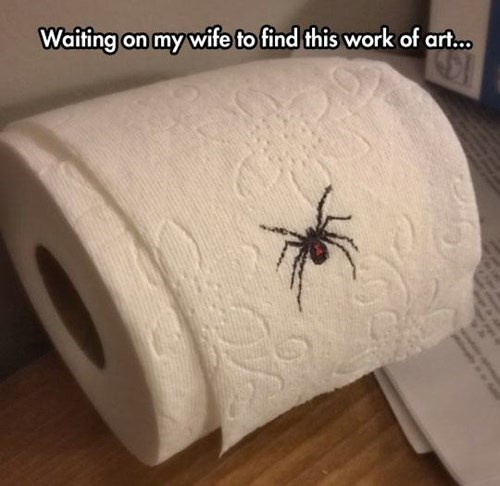 spiders,toilet paper