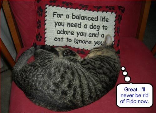 ignore advice Cats - 8365340928