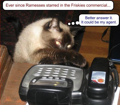 fame internet famous friskies Cats - 8365345536