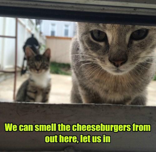 Cheezburger Image 8365600512