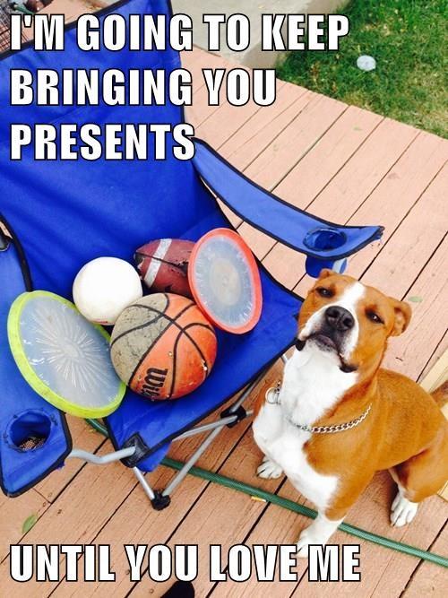 animals present toys love - 8366412544