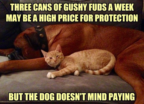 THREE CANS OF GUSHY FUDS A WEEK MAY BE A HIGH PRICE FOR PROTECTION BUT THE DOG DOESN'T MIND PAYING