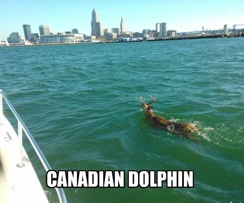 Canada dolphin deer - 8366891264