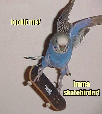 birds,puns,skateboard