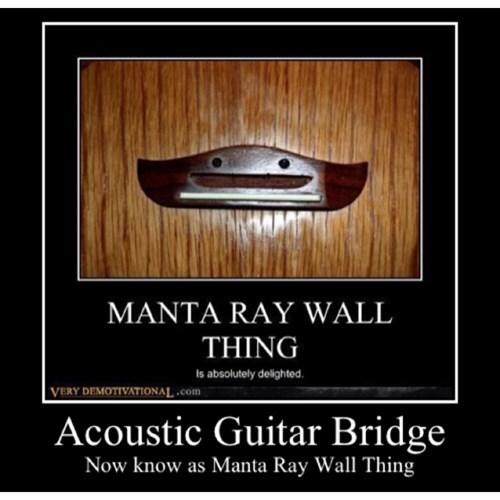 guitar wtf manta ray funny - 8367605504