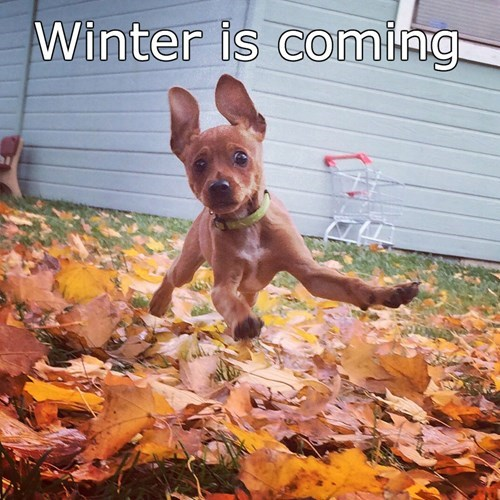 autumn dogs puppy fall - 8367985664