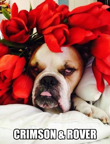 dogs Music bulldog puns - 8368061952