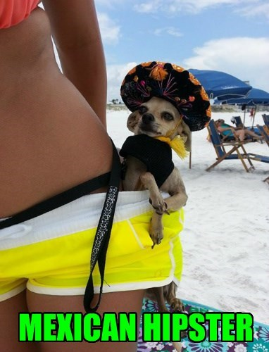 dogs hipster chihuahua ouns - 8368066304