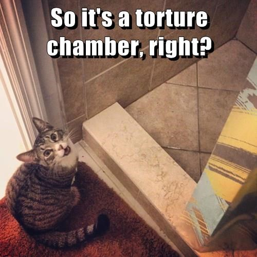 evil,torture,Cats
