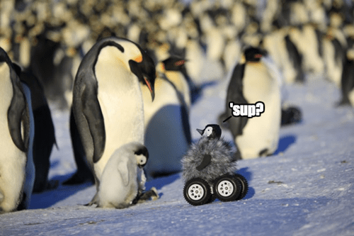 penguins cute robots science squee - 8368196352