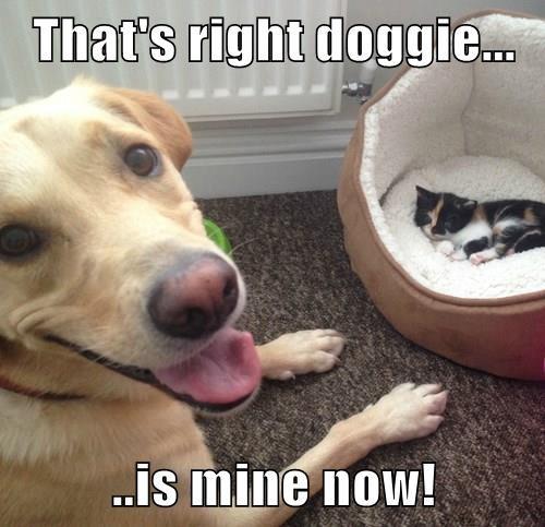 animals dogs labrador mine hierarchy Cats - 8368343040