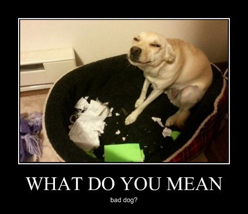 cute bills dogs funny wtf - 8368345600