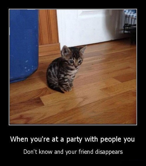 Cats cute funny Party - 8368346624