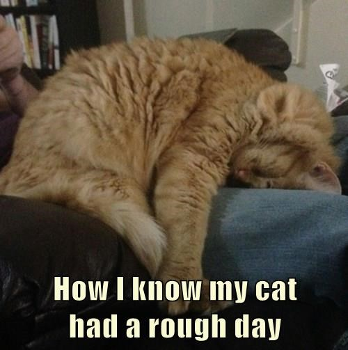 animals tabby depressed bad day Cats - 8368359680