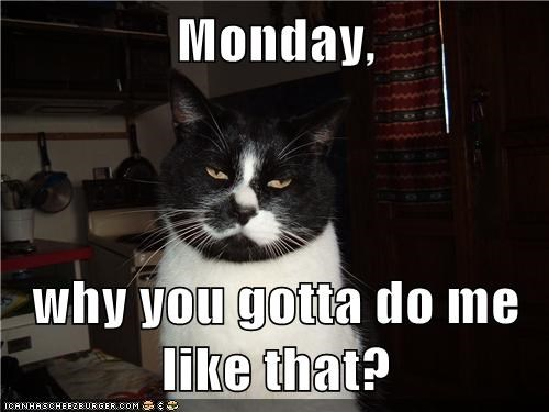 why,Cats,monday