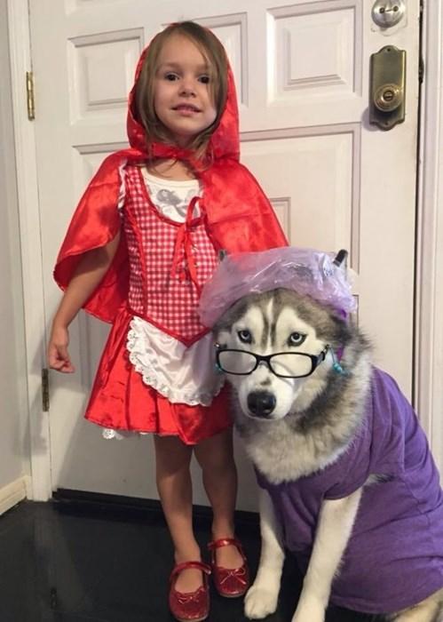 halloween costumes dogs halloween Little Red Riding Hood huskies - 8368474368